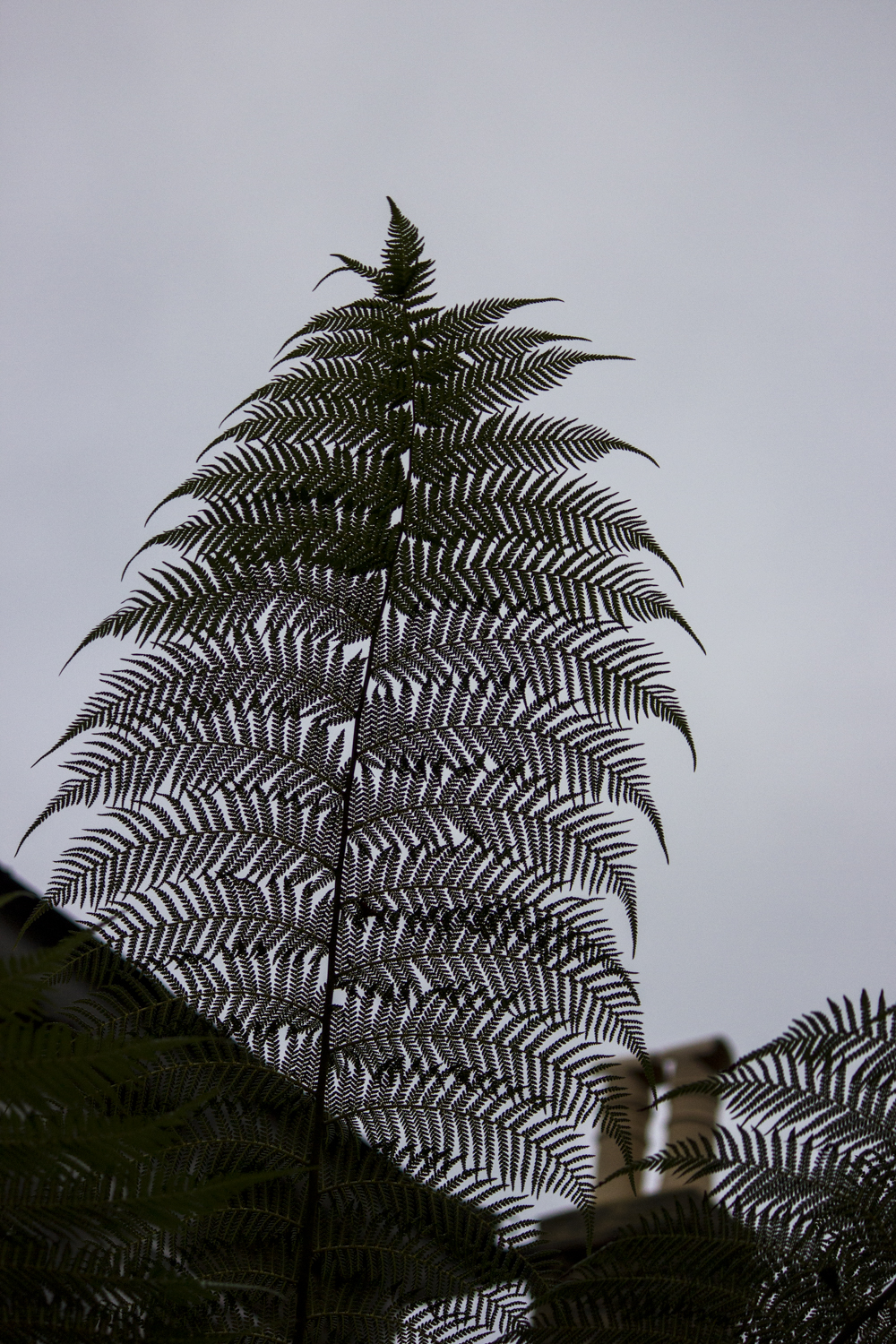fern and chimney